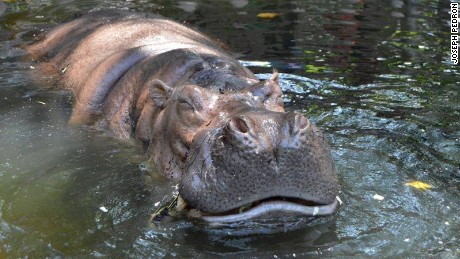 'Queen Bertha' was a longtime resident of the Manila Zoo.