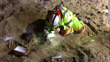 Paleontologist Dr. Ashley Leger preparing a tusk for removal