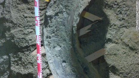 A mammoth tusk discovered