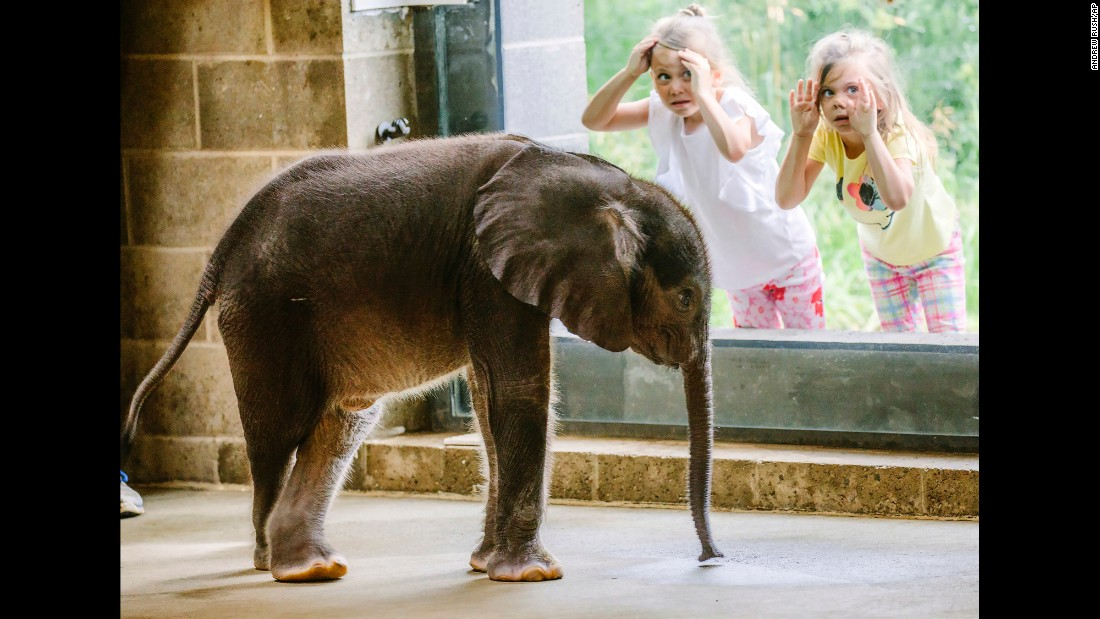 Children view the Pittsburgh Zoo's 4-week-old baby elephant as it meets the public for the first time on Friday, July 7.