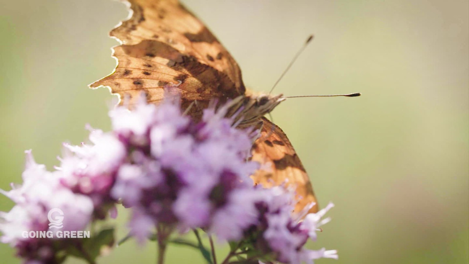 why our cities need butterflies cnn