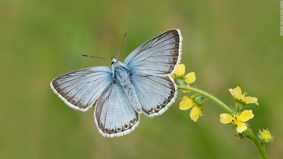 Ten-year trends in the UK show that 52 percent of species decreased in abundance and 47 percent decreased in occurrence, according to Butterfly Conservation.