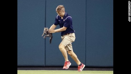 A member of the Busch Stadium grounds crew removes a cat that ran onto the field during a baseball game between the St. Louis Cardinals and the Kansas City Royals on Wednesday.