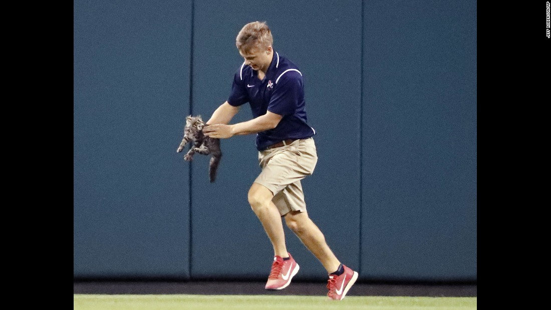 "Lucas Hackmann, a member of the Busch Stadium grounds crew, removes a cat that <a href=""http://bleacherreport.com/articles/2726672-cardinals-hit-grand-slam-after-rally-cat-invades-field"" target=""_blank"">ran onto the field</a> during the sixth inning of a St. Louis Cardinals baseball game on Wednesday, August 9. When the game resumed, Cardinals catcher Yadier Molina hit a grand slam to give the team the lead. The ""Rally Cat"" left Hackmann with scratch and bite injuries, the Cardinals said."