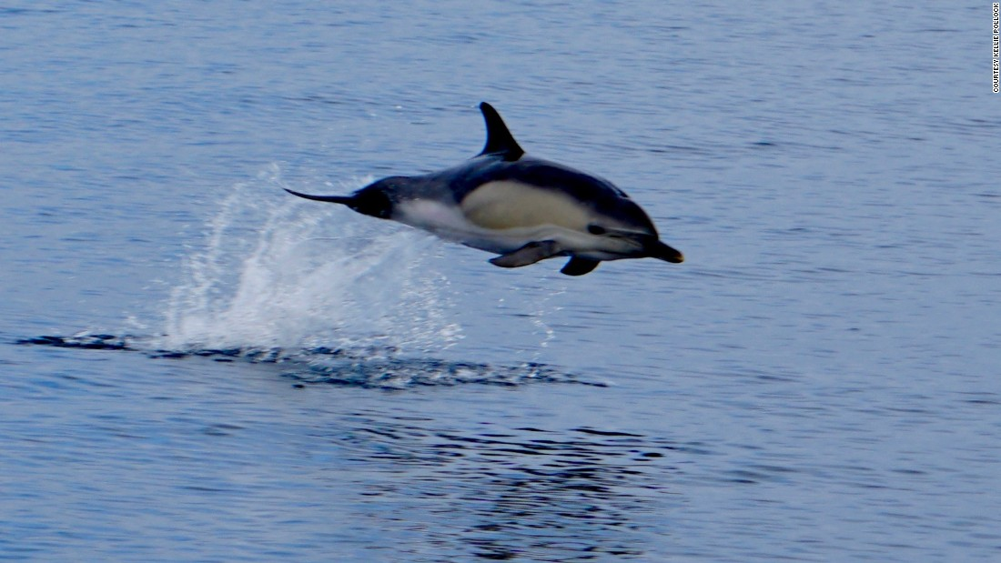 One of the dolphins that accompanied the boat during the four-day crossing of the notorious Bay of Biscay.