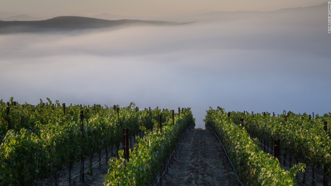 <strong>Santa Ynez, California: </strong>Morning fog stretches across a mountainside Cabernet Sauvignon vineyard. California's Central Coast vineyards have bounced back this year after a worrying five-year drought.
