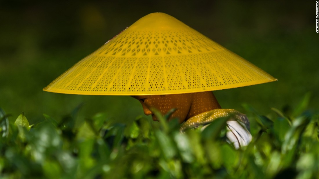 In this photo, released on Monday, August 21, a woman works in a field in the Chinese province of Guizhou.