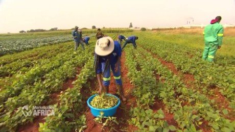 What Trump and African leaders need to know about food security