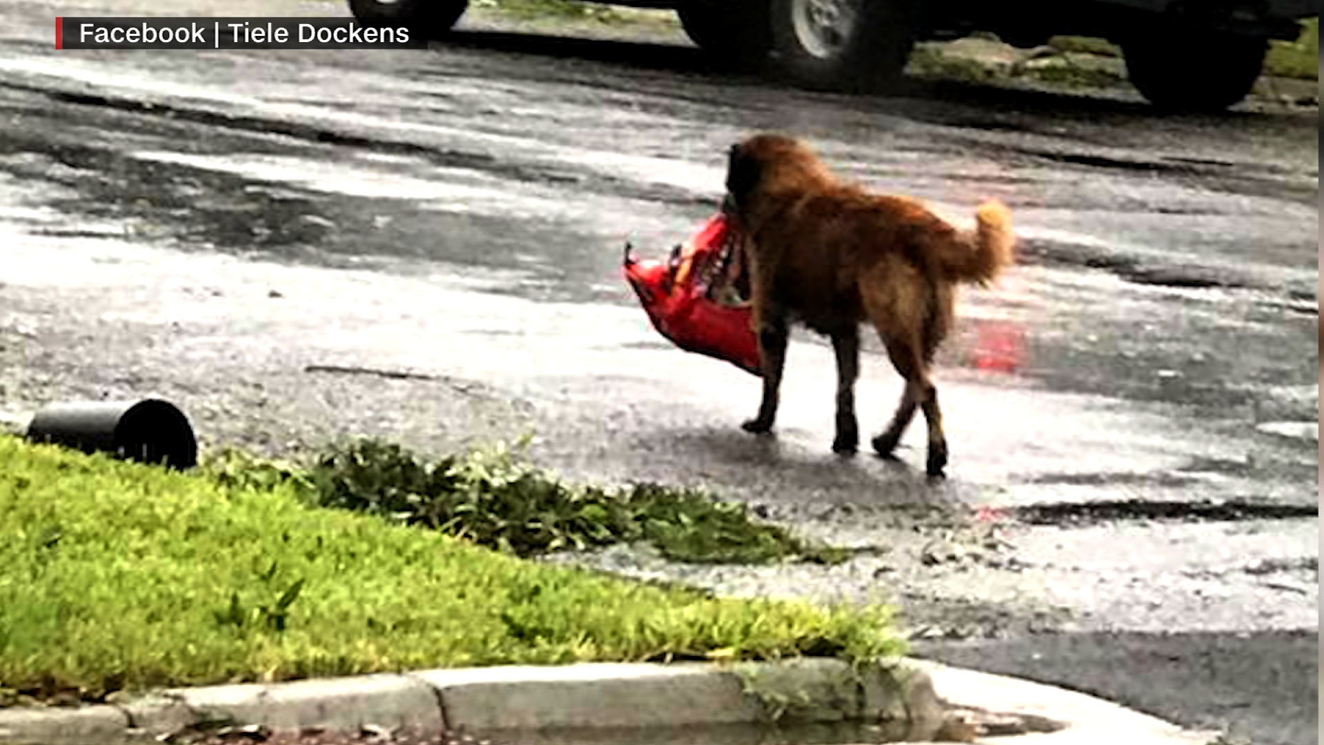 Photo Of Dog Carrying Bag Of Food Goes Viral CNN Video - Some people tied their dogs up and left them to die during the flood