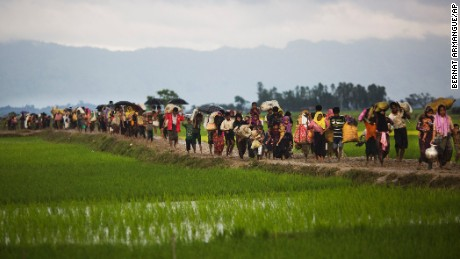 Rohingya walk through rice fields after crossing over to the Bangladesh border.