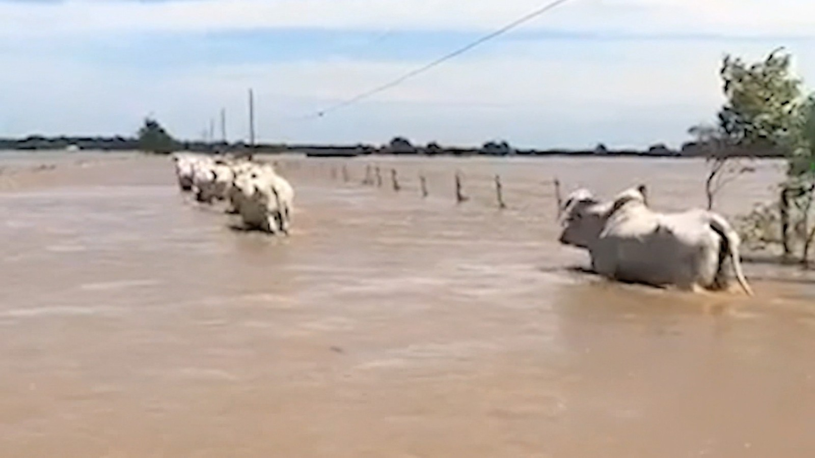 texas ranchers battle to save cattle cnn video