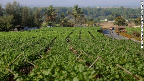 Sula Vineyard in Nashik.