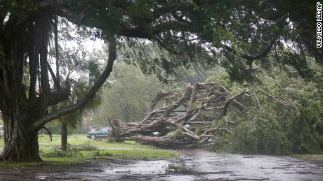 A large tree blocks a road in Coral Gables, southwest of Miami, on September 10.