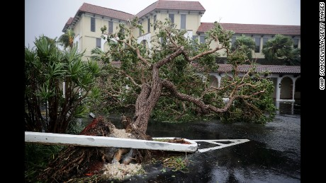 Fallen trees blocks a parking lot in Fort Lauderdale, Florida as Hurricane Irma slams into the southern part of the state on September 10.