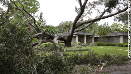 A split oak tree sits in a yard after Hurricane Irma passed through Tampa.