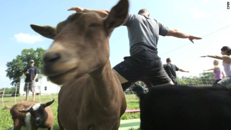 Goat Yoga is Here to Namaste_00003304
