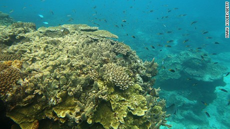 LADY ELLIOT ISLAND, AUSTRALIA - JANUARY 15: Fish are seen swimming around coral formations on January 15, 2012 in Lady Elliot Island, Australia. Lady Elliot Island is one of the three island resorts in the Great Barrier Reef Marine Park (GBRMPA) with the highest designated classification of Marine National Park Zone by GBRMPA. The island of approximately 40 hectares lies 46 nautical miles north-east of the Queensland town of Bundaberg and is the southern-most coral cay of the Great Barrier Reef. (Photo by Mark Kolbe/Getty Images)