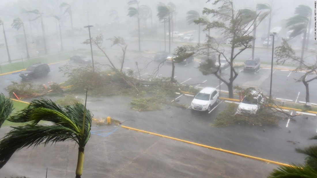Trees are toppled outside the Roberto Clemente Coliseum in San Juan on September 20.