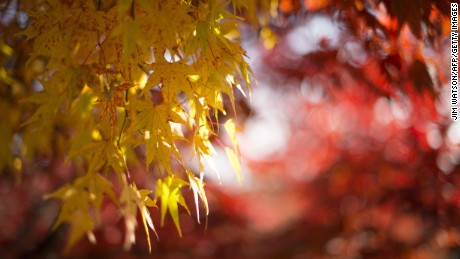 50 fun things to do this fall (take your pick)