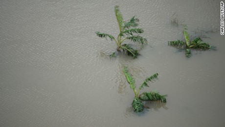 A plantain field stands under water after the passing of Hurricane Maria in Yabucoa, Puerto Rico, Thursday, September 21, 2017. As of Thursday evening, Maria was moving off the northern coast of the Dominican Republic with winds of 120 mph (195 kph). The storm was expected to approach the Turks and Caicos Islands and the Bahamas late Thursday and early Friday.
