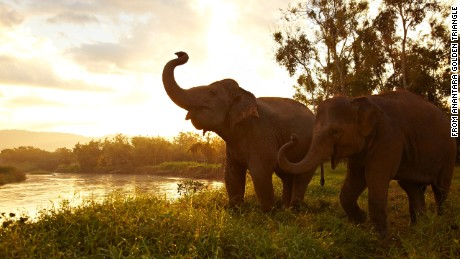 elephants thailand Anantara Golden Triangle