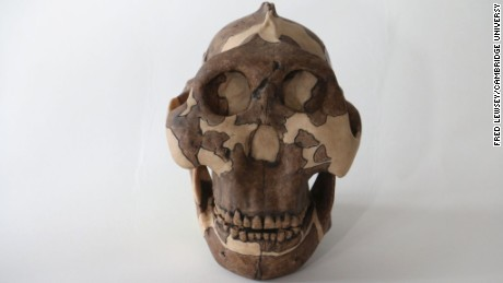 This early human ancestor is to blame for genital herpes