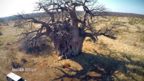 Inside Africa Drought may have forced a population to flee C_00030210