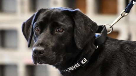 lulu cia bomb-sniffing dog retired mxp_00003803