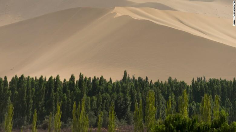 Dagli anni '70, la Cina ha piantato miliardi di alberi nel tentativo di trattenere l'invasione del deserto del Gobi.  La fascia della foresta è conosciuta come il Grande Muro Verde.