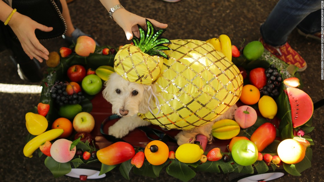 A dog in a pineapple costume attends the annual Tompkins Square Halloween Dog Parade in New York City on Saturday, October 21.