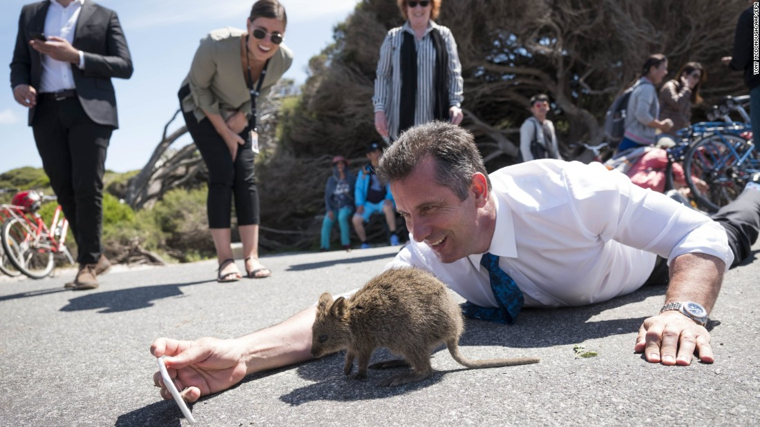 Paul Papalia, Western Australia's minister for tourism, tries to get a selfie with a quokka during a visit to the state's Rottnest Island on Tuesday, October 24.