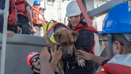 Sailors help Zeus, one of two dogs who were on the sailboat, aboard the Ashland.