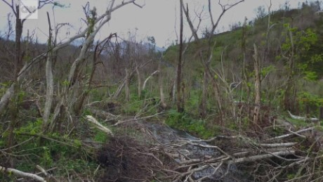 Puerto Rico rainforest destroyed drone nccorig_00000114