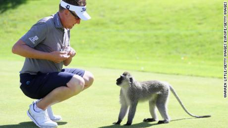 SUN CITY, SOUTH AFRICA - NOVEMBER 07:  Ian Poulter of England feeds the monkeys on the range at the Lost City ahead of the Nedbank Golf Challenge at Gary Player CC on November 7, 2017 in Sun City, South Africa.  (Photo by Warren Little/Getty Images)