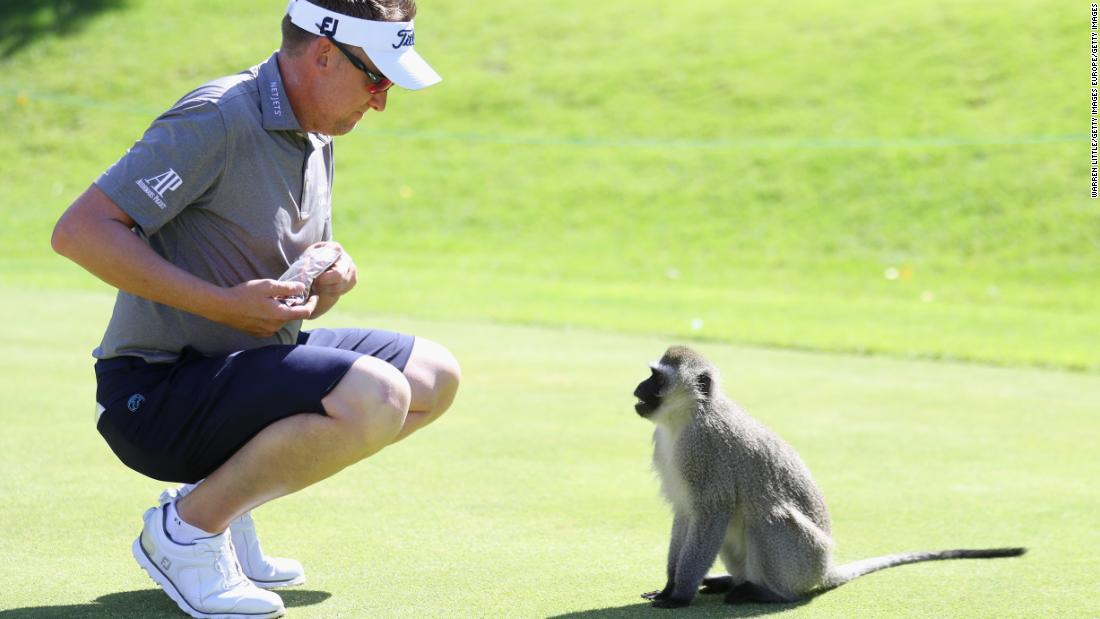 Poulter isn't the first golfer to encounter animals at the Gary Player Country Club...