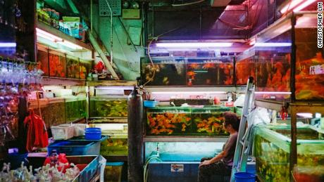 "Finding Gold: ""We were around the Goldfish Market scouting out locations for a shoot and I had my camera with me. I always enjoy the neon lights in Mong Kok. I guess that's why people go there. And I saw something out of the corner of my eye and stopped to shoot it. I framed so that all the fish tanks were symmetrical -- I wanted to capture her looking at her fish, connecting with them."""