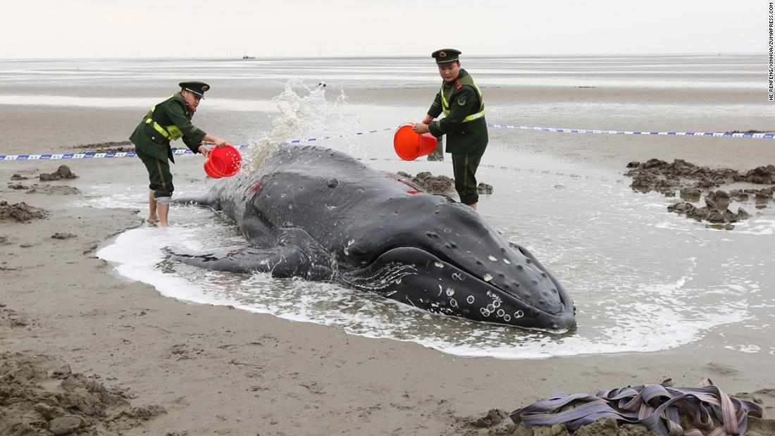 Soldiers in Qidong, China, help a humpback whale return successfully to the ocean after it ran aground on Monday, November 13.