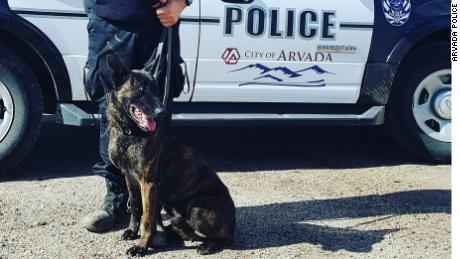 Colorado trains K-9 police to save their dogs from opioid overdoses