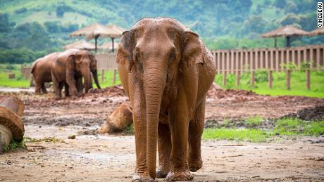 Chang Mai Elephant Nature Park