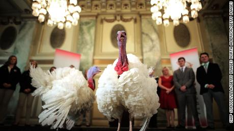 WASHINGTON, DC - NOVEMBER 20:  Drumstick and Wishbone, the National Thanksgiving Turkey and its alternate 'wingman,' are introduced during an event hosted by The National Turkey Federation at the Williard InterContinental November 20, 2017 in Washington, DC. One of the 40-pound fowl will be presented to U.S. President Donald Trump at the White House Tuesday, when he will ceremoniously 'pardon' the turkey. Both of the 20-week-old birds will then reside at their new home, 'Gobbler's Rest,' at Virginia Tech.  (Photo by Chip Somodevilla/Getty Images)