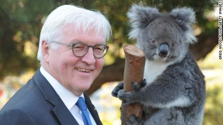 "PERTH, AUSTRALIA - NOVEMBER 03:  President of the Federal Republic of Germany, Frank-Walter Steinmeier, stands with koala ""Karen"" as he visits Kings Park in Perth at the start of a state visit on November 3, 2017 in Perth, Australia. Dr Frank-Walter Steinmeier is visiting with his wife Elke Budenbender on a three-day visit to Australia.  (Photo by Greg Wood - Pool/Getty Images)"