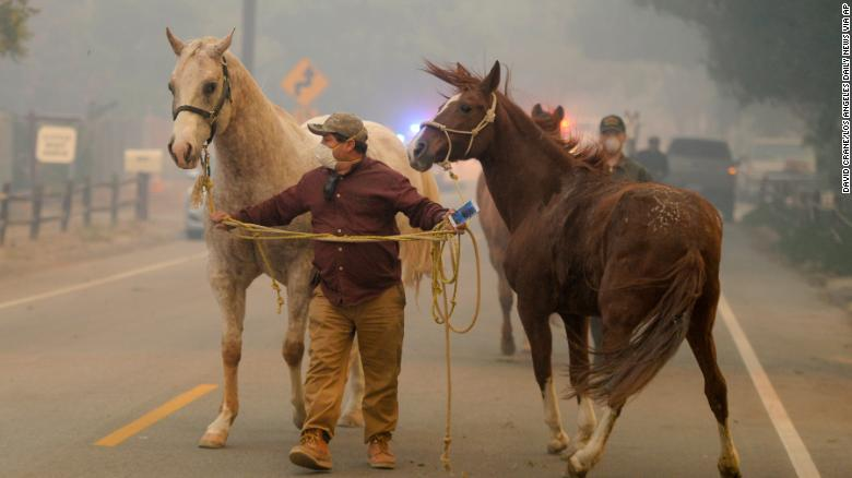Horses Burned To Death In California Fires Cnn