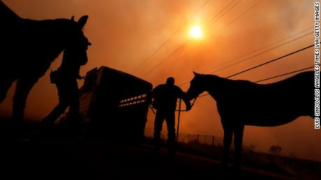 Officers with the Los Angeles Police Department evacuate a pair of horses near the Creek Fire.