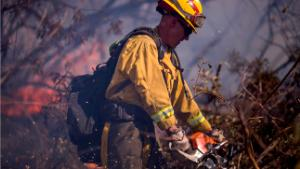 FILLMORE, CA - DECEMBER 07:  A firefighter cuts brush at the Thomas Fire on December 7, 2017 near Fillmore, California. Strong Santa Ana winds are pushing multiple wildfires across the region, expanding across tens of thousands of acres and destroying hundreds of homes and structures.  (Photo by David McNew/Getty Images)