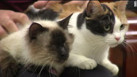 Blind cat and his best friend find new home thanks to social media