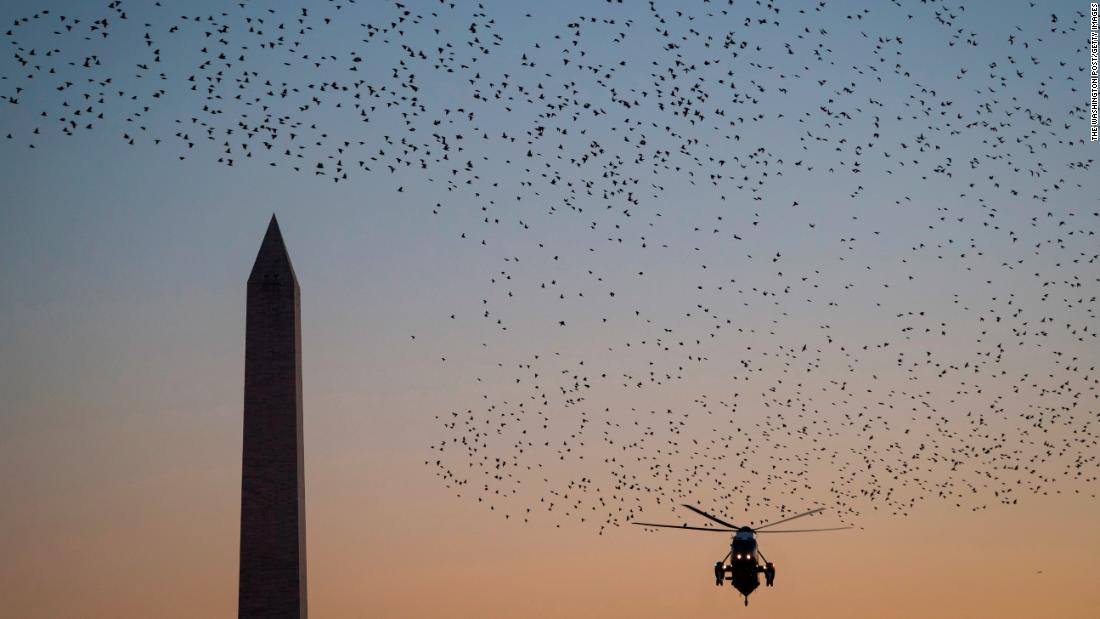 Starlings pass in front of the Washington Monument and the Marine One helicopter, as President Donald Trump returns to the White House from Walter Reed Medical Center on December 21.