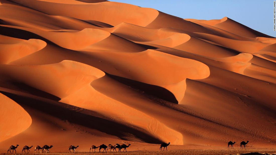 Camels walk across the Liwa desert in the United Arab Emirates on Thursday, January 4.