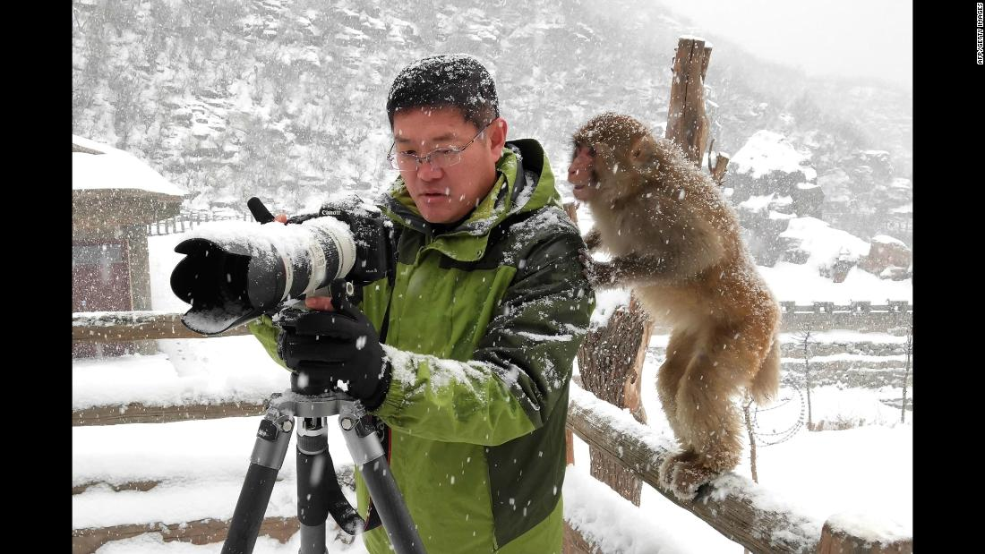 A macaque looks at a man's camera Saturday, January 6, at the Wulongkou Nature Reserve in Jiyuan, China.