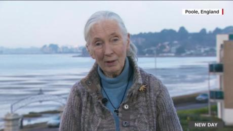 trophy film jane goodall_00031027.jpg