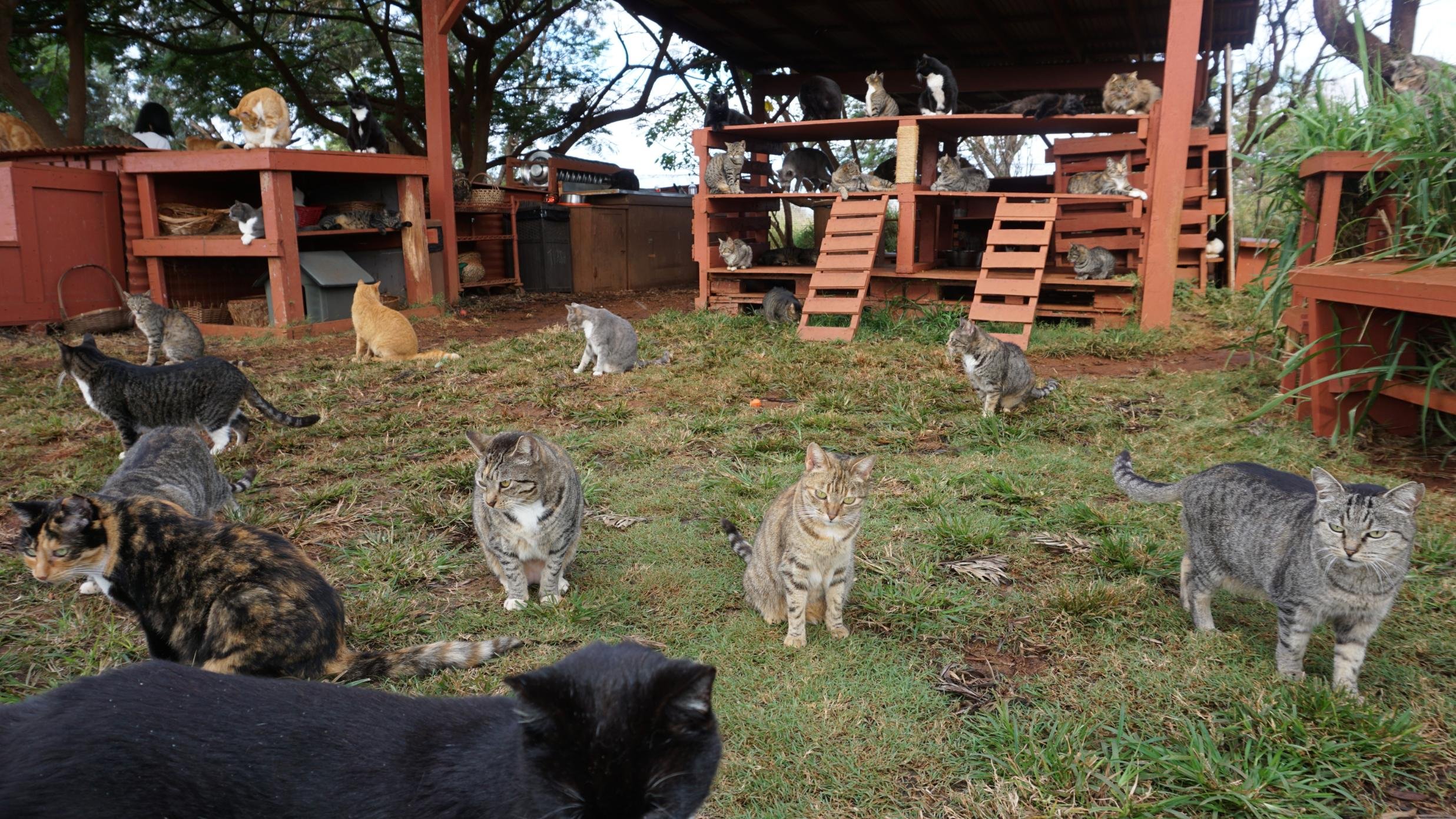 Lanai Cat Sanctuary: 600 felines live out their best lives
